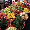Vi vu Lào thưởng thức món ăn chay đầy sức hấp dẫn